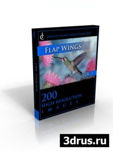 FLAP WINGS VOL 01