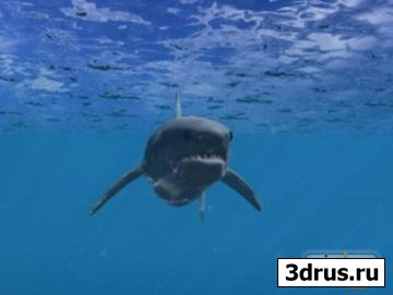 White Shark 3D Screensaver