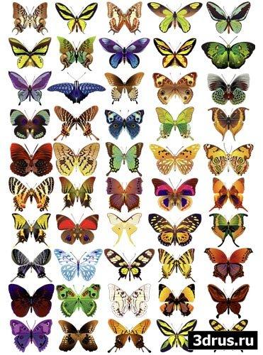 50 векторных бабочек