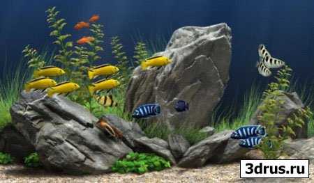 Dream Aquarium Screensaver v1.163 - Великолепная 3D Заставка.