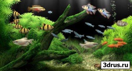 Dream Aquarium Screensaver v1.163 - Великолепная 3D Заставка.