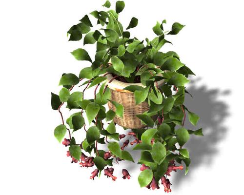 Комнатные растения приметы