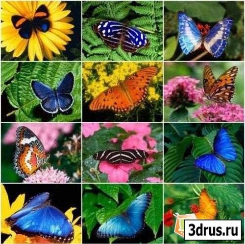 Butterfly Wallpapers Очень красивые обои на рабочий стол