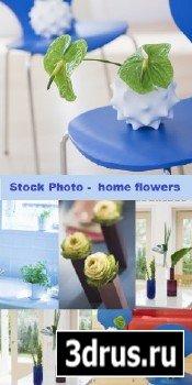 Stock Photo - home flowers