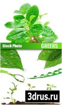 Stock Photo - Greens