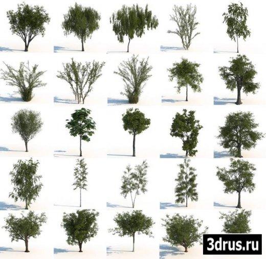 3D Models. Trees.