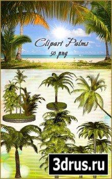 Клипарт PNG - Пальмы