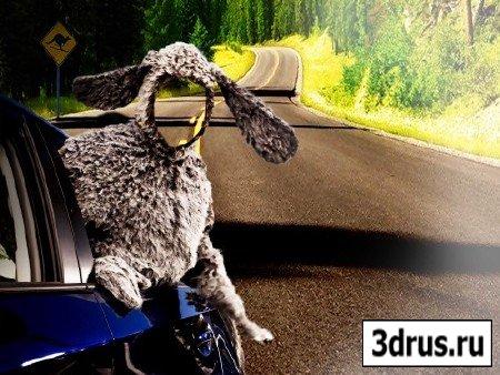 Мужской шаблон-по дороге с овцой