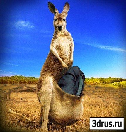 Мужской шаблон - в кенгуру